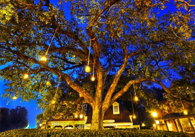 liberty oak