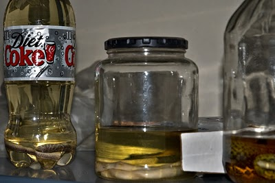 Preserved snakes... with one in a Diet Coke bottle?