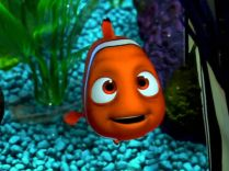 It's a wild world, Nemo.
